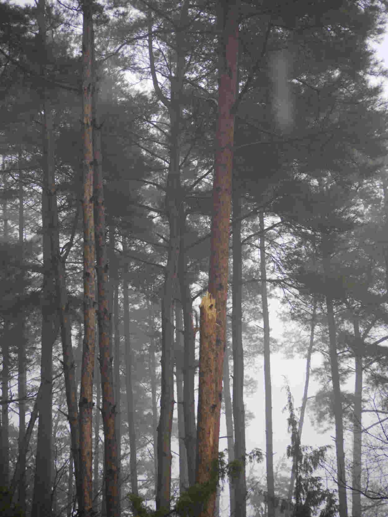 3月25日松林雨1.jpeg