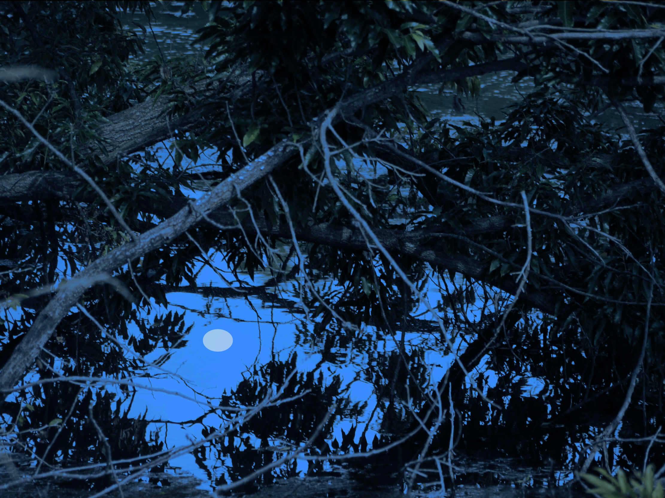 新田ため池夜2B.jpg