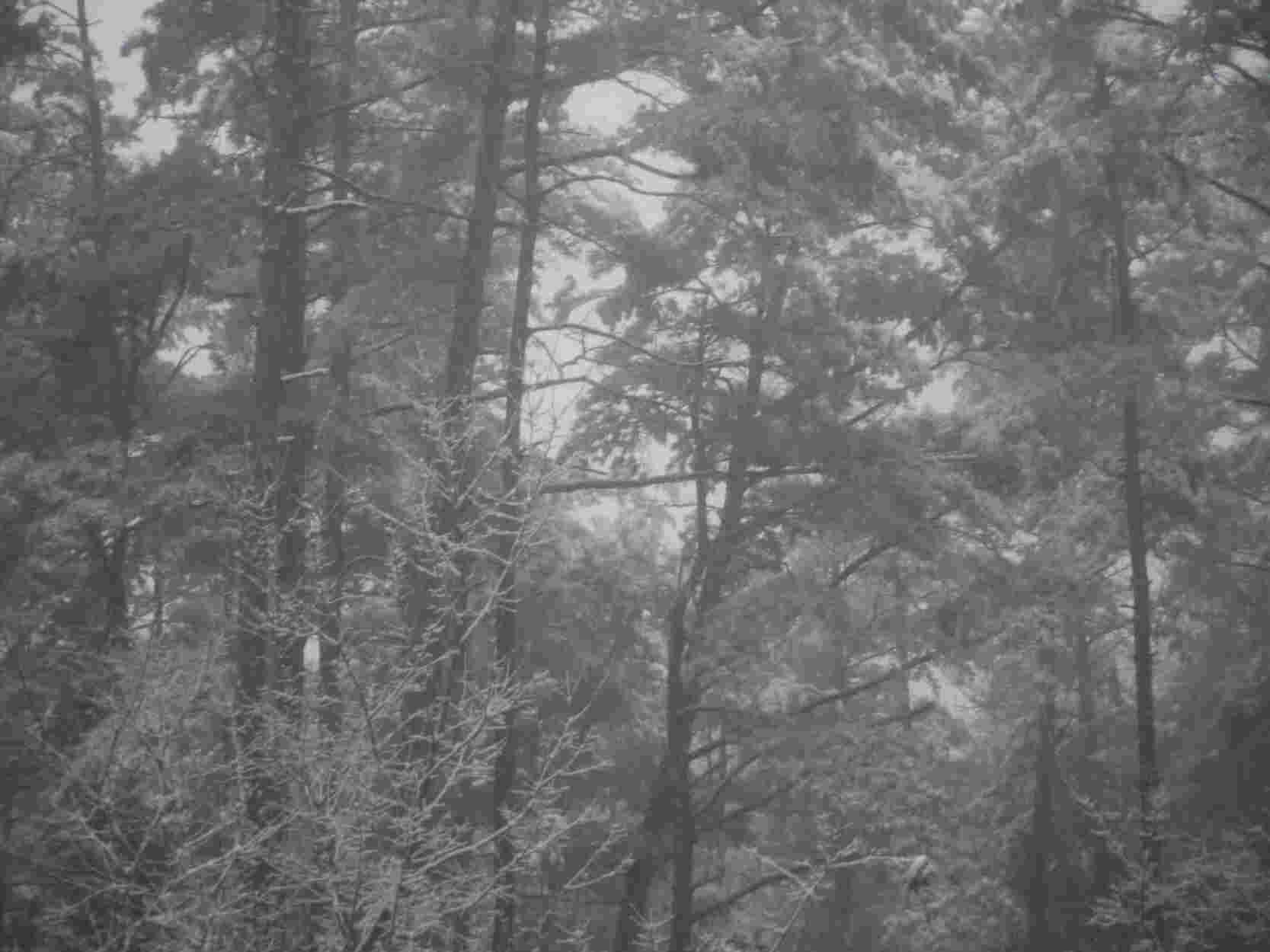 春雪3.jpeg